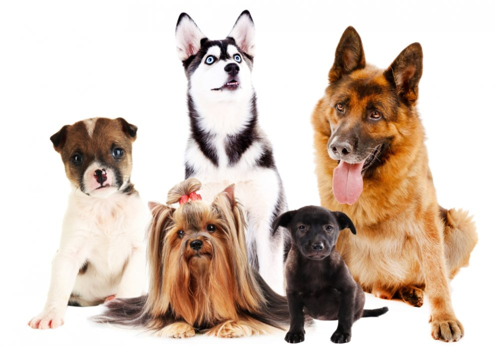 Group of Dogs - How to Calm a Dog Down: 5 Simple & Effective Tips